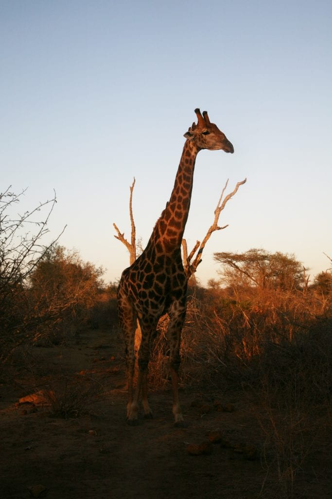 Kruger National Park: One Of The Best African Safari Tours