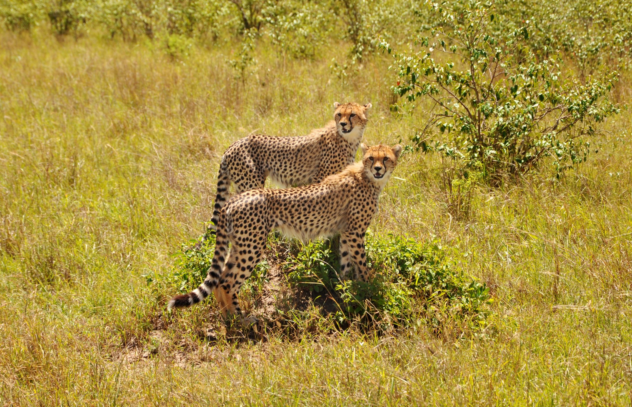 What Is A Safari Trip? Know With Us