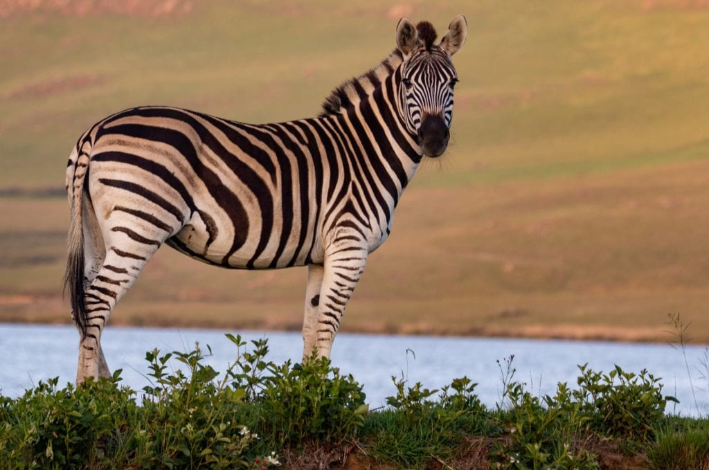 African Safari Holidays Are Best